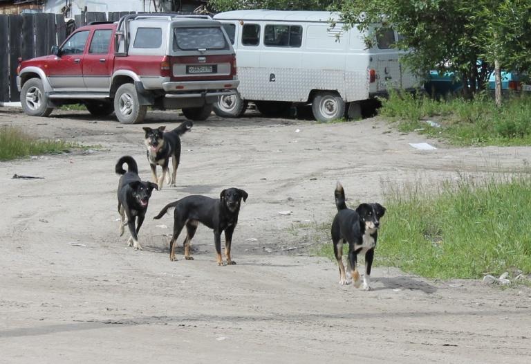 отлов собак нижневартовск